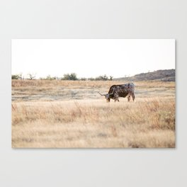 Longhorns 01  Canvas Print