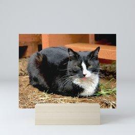 Blep Kitty (Lanai Cat Sanctuary) Mini Art Print