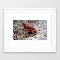 frog Framed Art Prints featuring frog. by zenitt