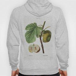 Fig (Ficus) from Traite des Arbres et Arbustes que lon cultive en France en pleine terre (1801-1819) Hoody