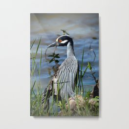 Heron with a broken wing Metal Print