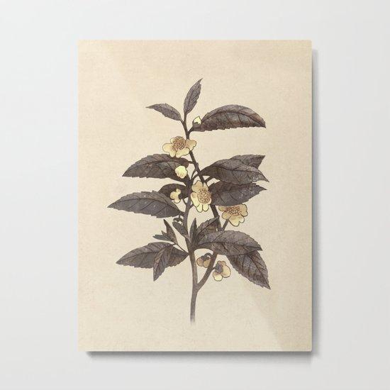 Late Bloom  Metal Print
