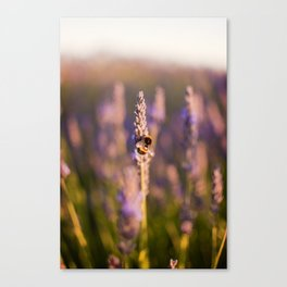 The nectar collector  Canvas Print