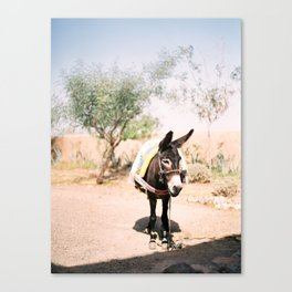 Cute donkey in the Agafay Desert of Morocco | Marrakech travel photography Canvas Print