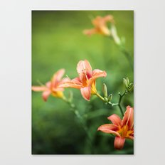 Lilies Of The Field - Orange  Canvas Print