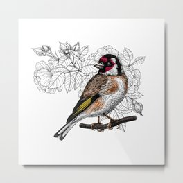 Goldfinch and roses Metal Print