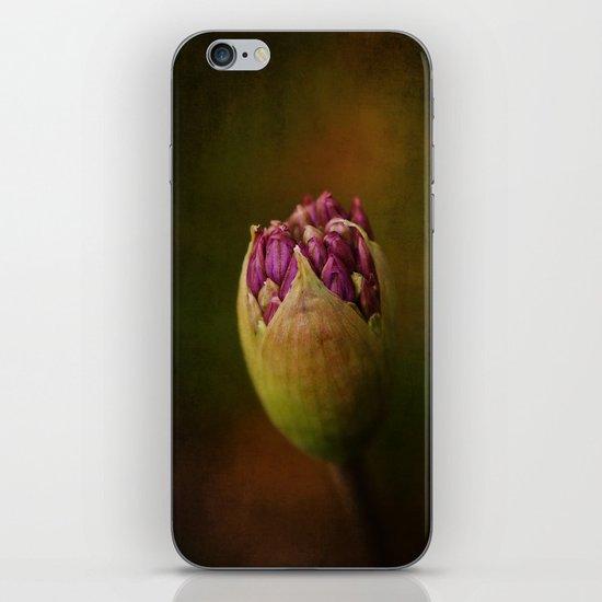 Allium in May iPhone & iPod Skin