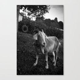 Noddy the Goat Canvas Print