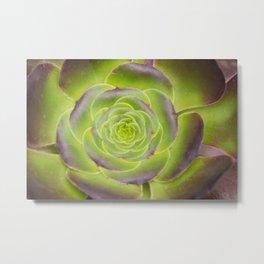 Succulent Glow Metal Print