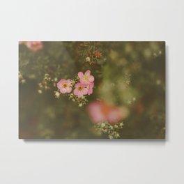 flower photography by Elina Bernpaintner Metal Print
