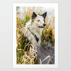 Welsh Boarder Collie Art Print