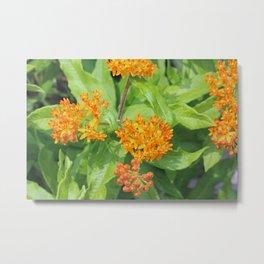 Blooming Orange Flower in Garden Metal Print