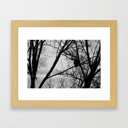 Old Eagle Framed Art Print