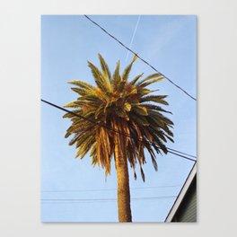 Venice Palm Canvas Print