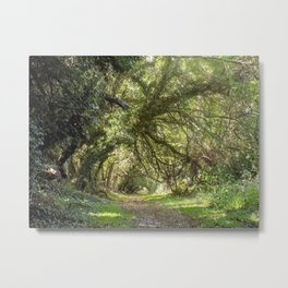 Ferngully of Maryland Metal Print