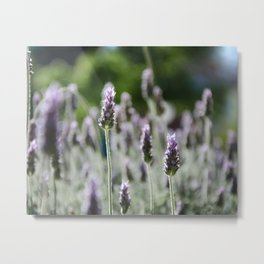 The Curious Stand Out Metal Print