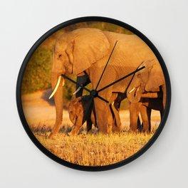 Elephants in the evening light - Africa wildlife Wall Clock