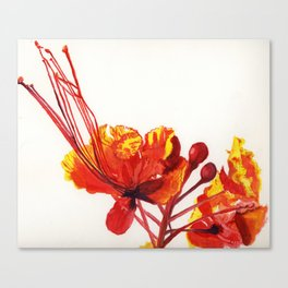 Pride of Barbados watercolour print Canvas Print