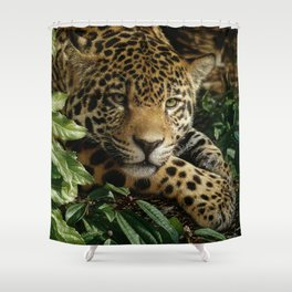 Jaguar - At Rest Shower Curtain