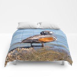 Beautiful Harlequin Duck on the Rocks Comforters