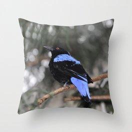 Blue and Black Bird Throw Pillow