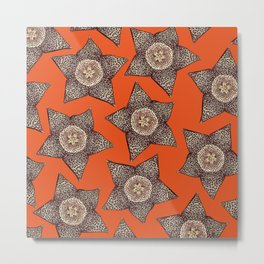 stapelia flower Metal Print