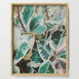 Verigated Rubber Plant Serving Tray