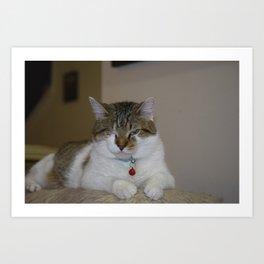Patch Cat Art Print