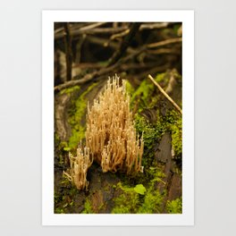 Biodiversidad vegetal Art Print