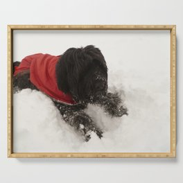 Briard in the Snow Serving Tray