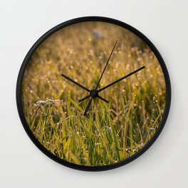 Cow Parsley in the early morning sun Wall Clock