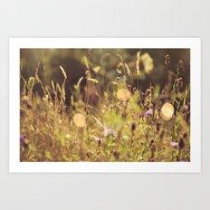 Summer Fields | 01 Art Print