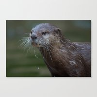 otter Canvas Prints featuring Otter by Mark Wheeler Photography