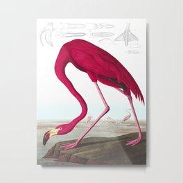 Flamingo Vintage Scientific Bird Illustration Metal Print