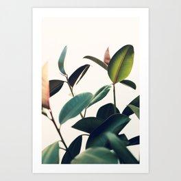 Ficus Elastica #8 Art Print