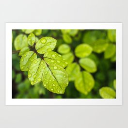 Plant Patterns - Green Scene Art Print