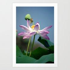 Lotus Blooms Art Print