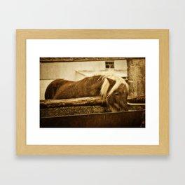 Mini Horse At The  Water Trough  Framed Art Print