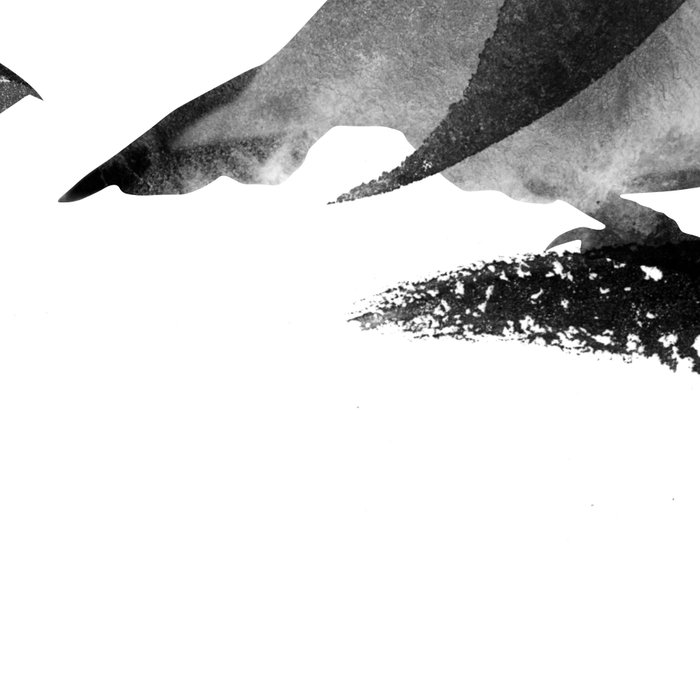 bird_1 Leggings