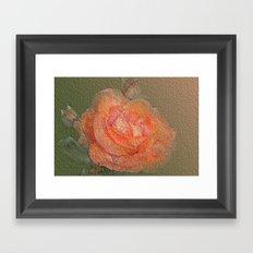 rose frome the garden Framed Art Print