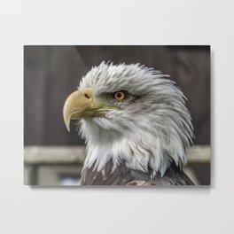 Eagle Eyes Metal Print