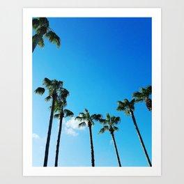 Palms and Skies Art Print