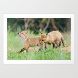 Head Held High - Baby Red Fox Pups Photograph Art Print