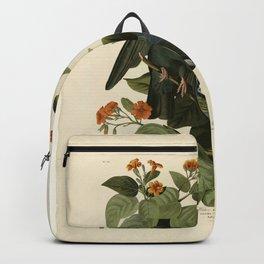 Vintage Bird Print - Birds of America - 177 White-crowned Pigeon (1838) Backpack