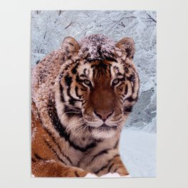 Tiger and Snow Poster