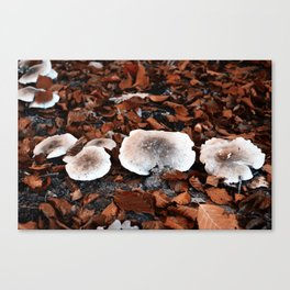 forrest mushrooms Canvas Print