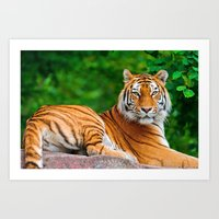 asian Art Prints featuring Asian Tiger by Tom Lee