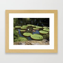 Giant Lily Pads Framed Art Print