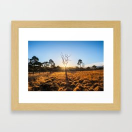 Coronation Plantation - Ireland (RR220) Framed Art Print
