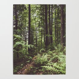 Woodland - Landscape and Nature Photography Poster